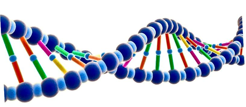Ein Bild eines Gens