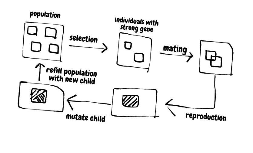 natürlicher Selektionsprozess (vereinfacht)