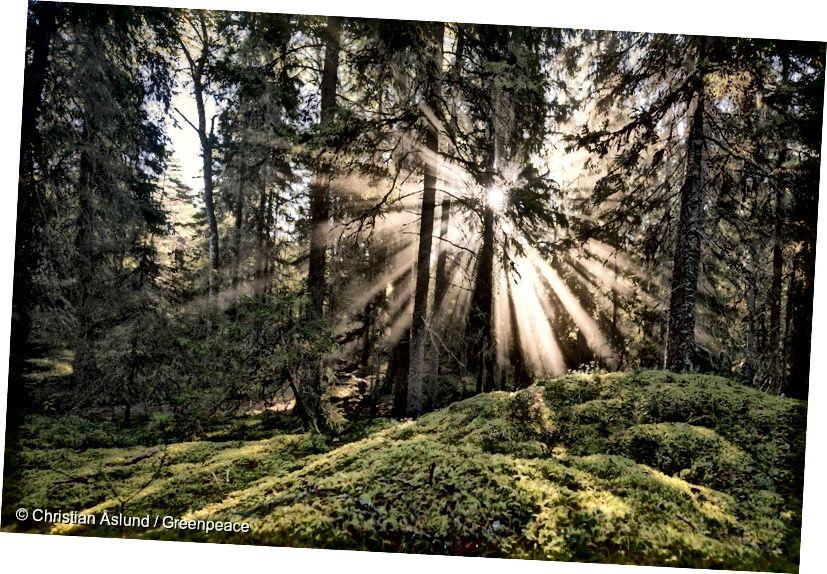 Looduskaitseala Rootsis - 2016