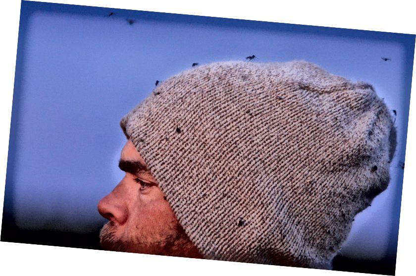 Аматары птушак, вы можаце дадаць у свой спіс новыя віды - неафіцыйная дзяржаўная птушка Аляскі - камар.  USFWS