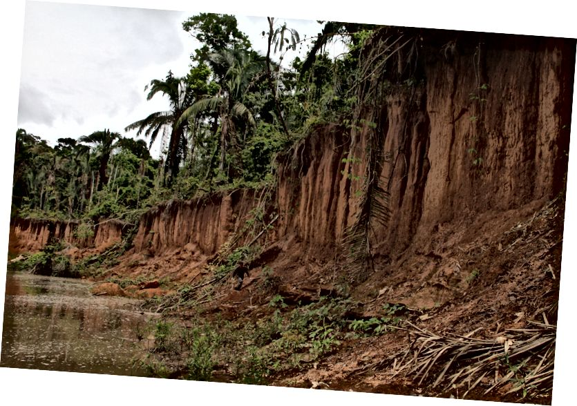 Jilat Clay di Cekungan Amazon di Tambopata. (Kredit: Proyek Donald Brightsmith / Tambopata Macaw.)