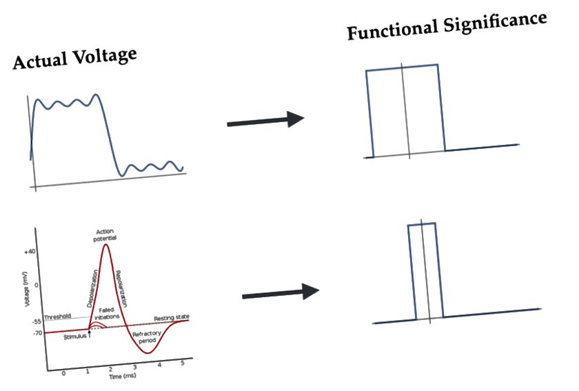 L'ordinateur numérique et le neurone. En haut: la tension réelle du transistor est «traduite» en 1. En bas: la tension réelle des neurones est «traduite» en 1.