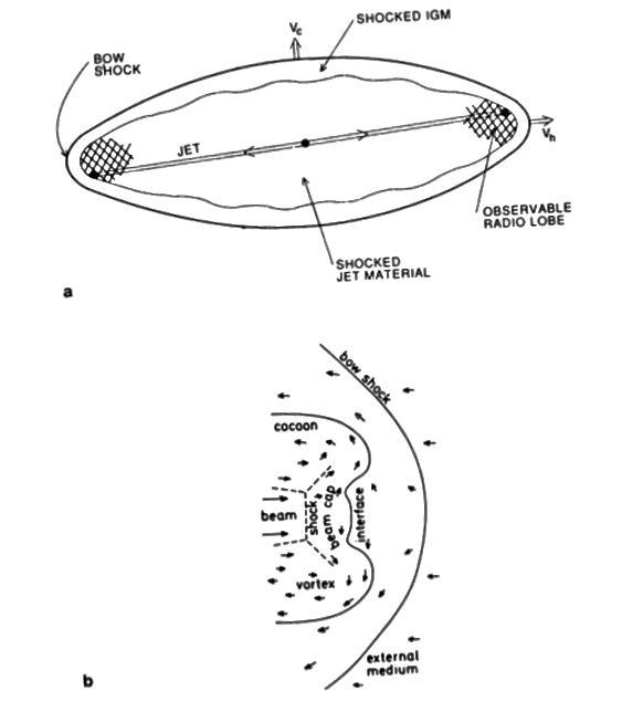 Gambar. 1, Carilli & Barthel 1995. Sebuah jet sempit galaksi radio dikelilingi oleh kejutan busur pada batas dengan media intergalaksi, serta kepompong radio.