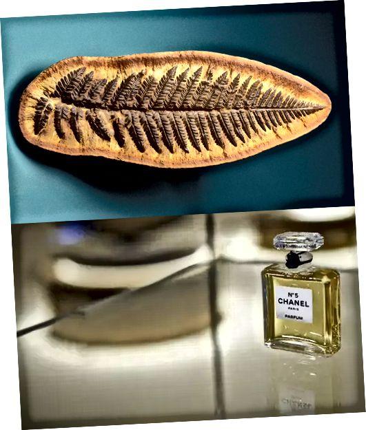 Ginkgo ingin menghidupkan kembali tanaman kuno untuk parfum langka. 1 ons Chanel membutuhkan sekitar 1.012 bunga!