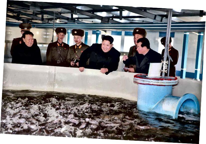 Kim Jong-Un fényképe, amelyet hetekkel adtak ki a legutóbbi észak-koreai nukleáris robbanás előtt. Ez mutatja a nemzet vezetőjét a harcsatenyésztő üzemben, egy észak-koreai nyilvánosságra nem hozott helyen. Kép jóváírása: KNS / AFP / Getty Images.