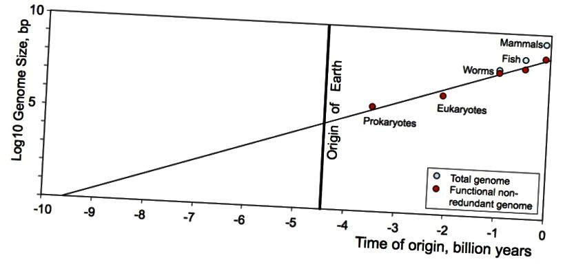 Na ovoj politološkoj parceli složenost organizama, mjereno duljinom funkcionalne ne redundantne DNK po genomu, brojenoj parovima nukleotidnih baza (bp), povećava se linearno s vremenom. Vrijeme se broji unatrag u milijardama godina prije sadašnjosti (vrijeme 0). Imajte na umu da, ako napravimo ovu ekstrapolaciju, mogli bismo zaključiti da je život na Zemlji počeo milijarde godina prije formiranja Zemlje (Shirov i Gordon (2013), putem https://arxiv.org/abs/1304.3381)