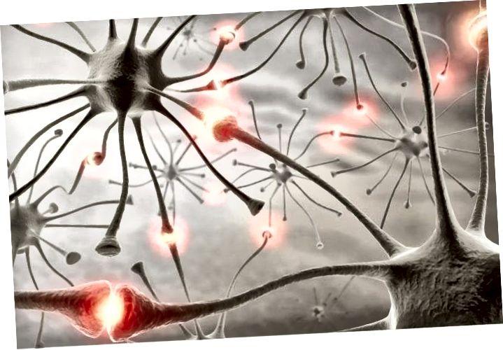 Inimeste autismiga seotud geeni mutatsioonid põhjustavad närvis närvirakkudes liiga palju seoseid. Leiud viitavad sellele, et autismi põhjuseks võivad olla ajurakkude vahelise kommunikatsiooni rikked. Allikas: Getty / Washingtoni ülikooli meditsiinikool