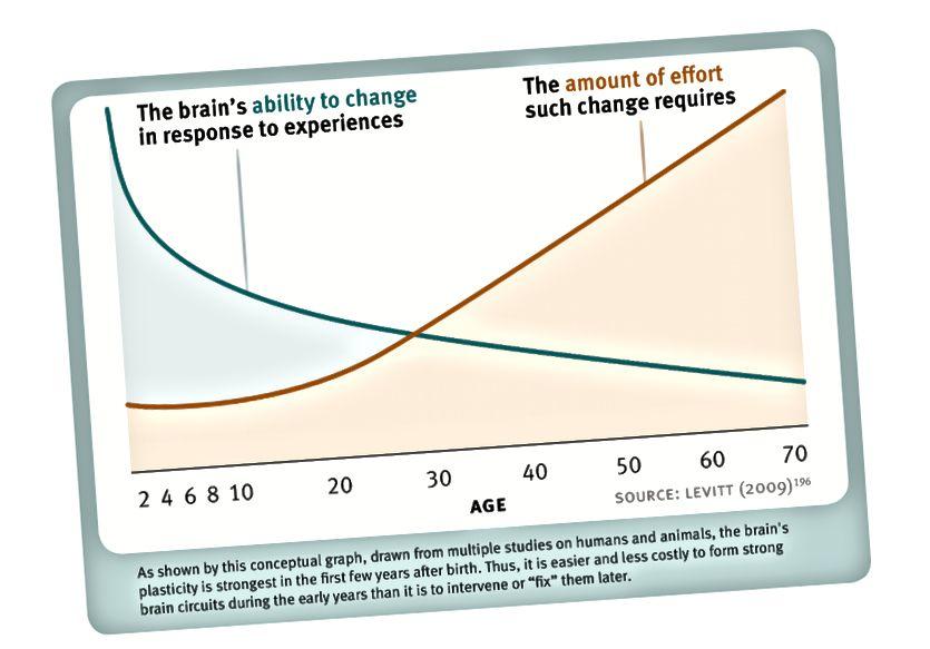 Малюнак 3. Пластычнасць мозгу на працягу ўсяго жыцця. Пат Левіт (паўторна выкарыстаны з дазволу).
