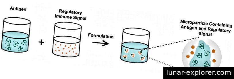 Abbildung 2: Ein krankheitsrelevantes Antigen (Schlüssel) und ein regulatorisches Immunsignal durchlaufen einen Formulierungsprozess, um ein Mikropartikel zu erzeugen, das beide Komponenten enthält. * Danke an meine Laborkameradin Emily Gosselin für die Bereitstellung der Originalfigur! *