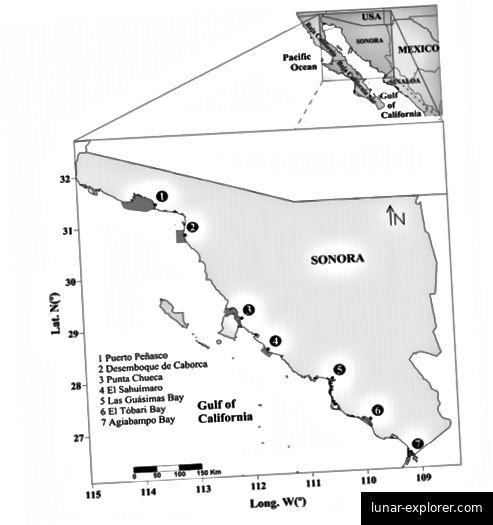 Abb. 7: In dieser Studie wurden sieben verschiedene Probenahmestellen verwendet, die jeweils einem Fischereigebiet entsprechen und in dunklerem Grau dargestellt sind. (Cisneros-Mata et al., 2019).