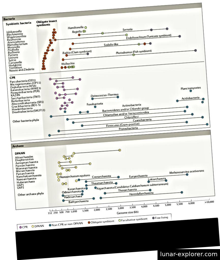 Abbildung 2 (Castelle et al. 2018): Eine Grafik, die die winzige Größe von CPR / DPANN-Genomen im Vergleich zu anderen Bakterien / Archaeen angibt. Diese geringe Genomgröße ist mit der Unfähigkeit der CPR / DPANN-Spezies verbunden, umfassende metabolische Komplexität aufzuweisen, und ist vielleicht die Ursache ihres oft endosymbiotischen Zustands.