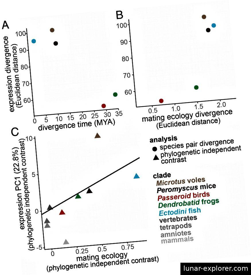 Figure 6. A & B. Die evolutionäre Zeit und Divergenz in den Eigenschaften des Paarungssystems zeigt keine Korrelation mit der differentiellen Genexpression. C. Signifikante Regressionskorrelation zwischen Paarungssystem und neuronaler Genexpression wird unter Verwendung phylogenetisch unabhängiger Kontraste nachgewiesen.
