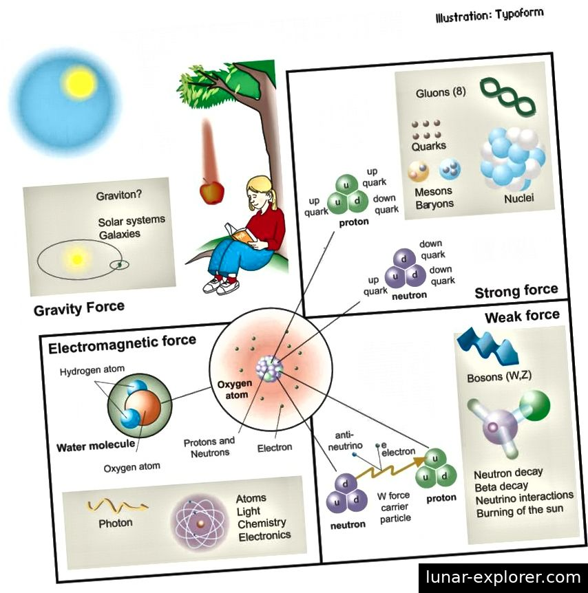 Die vier Kräfte (oder Wechselwirkungen) der Natur, ihre Kraft tragenden Teilchen und die von ihnen beeinflussten Phänomene oder Teilchen. Die drei Wechselwirkungen, die den Mikrokosmos beherrschen, sind alle viel stärker als die Schwerkraft und wurden durch das Standardmodell vereinheitlicht. Es ist eine enorme Leistung, aber wir wissen immer noch nicht, warum die Gesetze so sind, wie sie sind, oder warum die Konstanten die Werte haben, die sie besitzen. (TYPOFORM / NOBEL MEDIA)