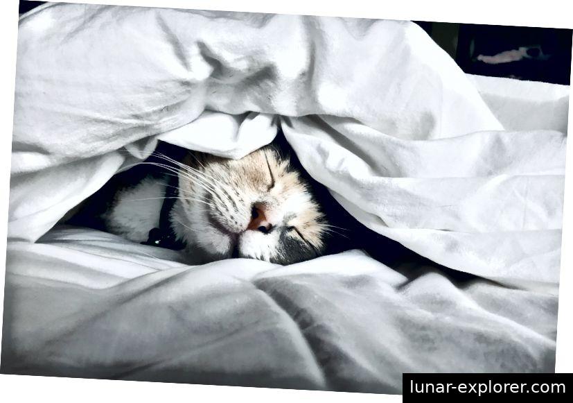 Schlaf an diesem Wochenende wie ein Baby! (Foto von Kate Stone Matheson auf Unsplash)