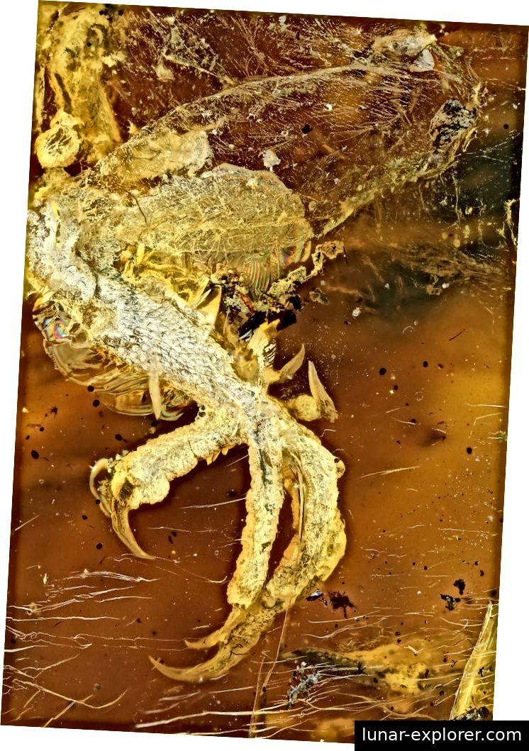 Überblick über Fuß und Schienbein, durchscheinende Haut oberhalb des Sprunggelenks. Bildnachweis: Ming Bai, Chinesische Akademie der Wissenschaften (CAS)