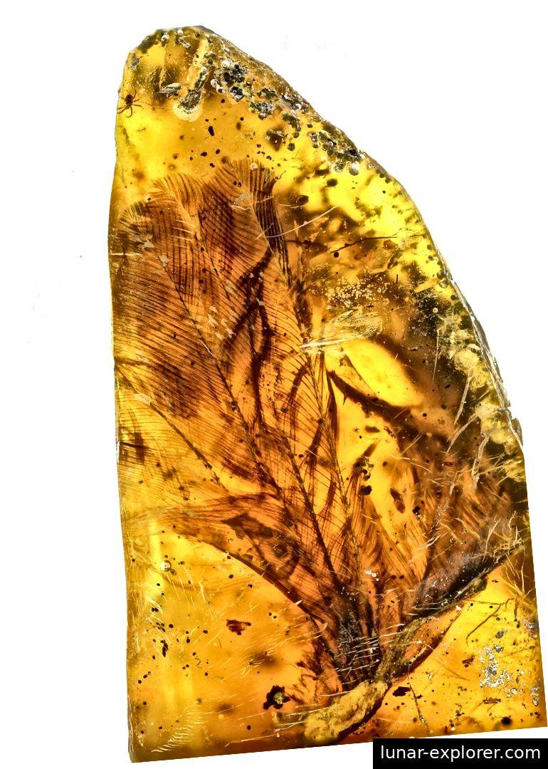 Überblick über die Flügelspitze (Fingerknochen in der unteren linken Ecke des Bildes), die zeigt, wie Federn an den Flügelknochen anhaften. Bildnachweis: Ming Bai, Chinesische Akademie der Wissenschaften (CAS)