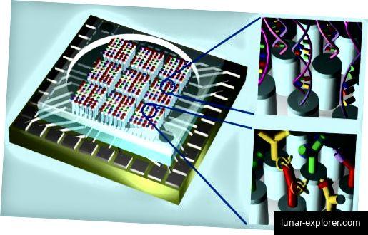 Nanosensor zur Detektion von Sprengstoffen (oben)