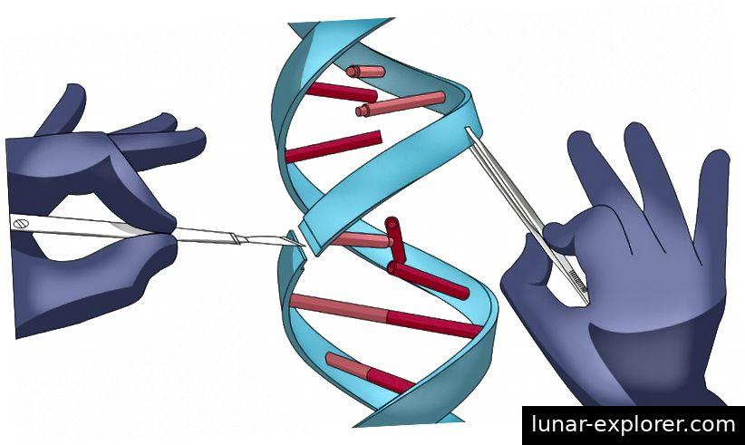 Was kostet es, unsere eigene Menschlichkeit zu entwickeln? (QUELLE: Genetisches Alphabetisierungsprojekt.)