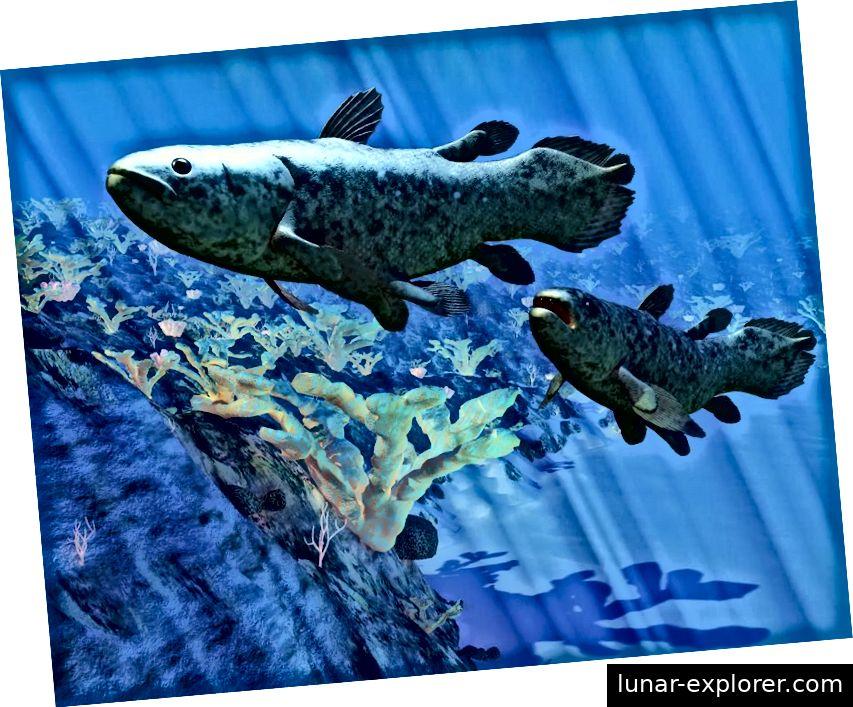 Es wurde angenommen, dass der Coelacanth-Fisch während der Kreidezeit ausgestorben ist, nachdem er vor mehr als 400 Millionen Jahren entstanden war. Eine überraschende Entdeckung eines lebenden Beispiels im Jahr 1938 änderte diese Geschichte; Coelacants werden heutzutage von vielen als ein