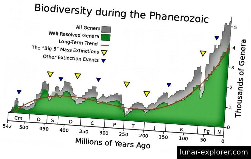 Ein Maß für die Artenvielfalt und die Veränderung der Anzahl der zu einem bestimmten Zeitpunkt existierenden Gattungen, um die wichtigsten Aussterbungsereignisse der letzten 500 Millionen Jahre zu identifizieren. Sie sind nicht periodisch und nur die jüngste (vor 65 Millionen Jahren) hat eine Ursache, die mit Sicherheit bekannt ist. Beachten Sie die Explosion der Artenvielfalt nach einem solchen Massensterben. (WIKIMEDIA COMMONS BENUTZER ALBERT MESTRE, MIT DATEN VON ROHDE, R.A. UND MULLER, R.A.)