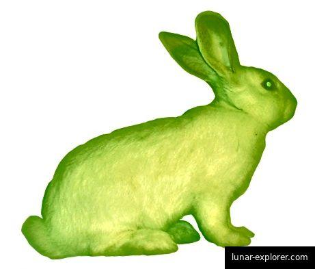 Alba, der fluoreszierende Hase. Bildnachweis: ekag.org