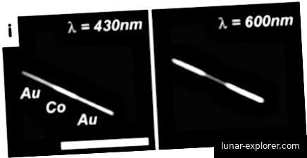 Bilder der optischen Reflektivität von Nanodrähten, die mit Cu- und Au-Streifen bei 430 nm- und 600 nm-Beleuchtung codiert sind [1]