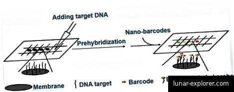 DNA-Blotting-Assay mit Nano-Barcodes [1]