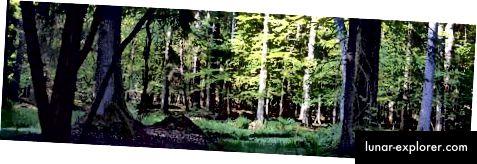Bialowieza Wald