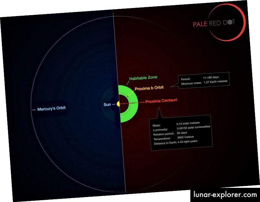 Die Umlaufbahn von Proxima b im Vergleich zur Umlaufbahn von Merkur. Bildnachweis: ESO / M. Kornmesser / G. Coleman.
