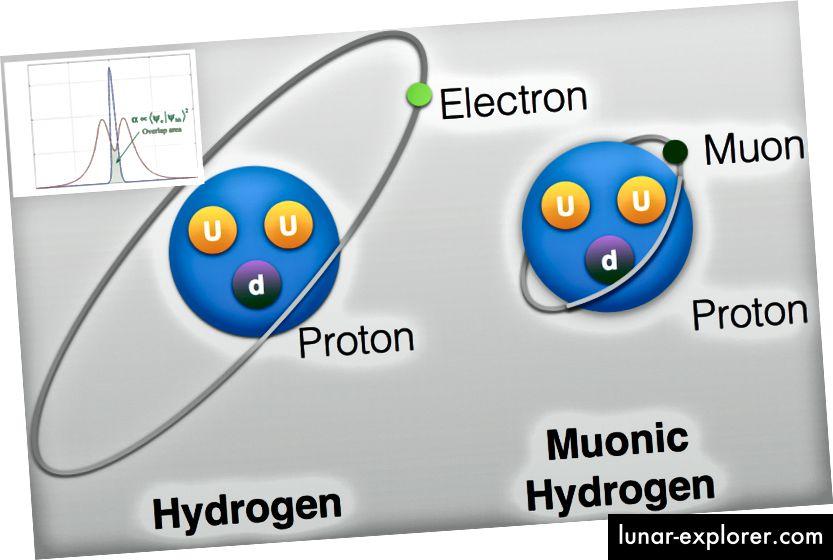 Eine Abbildung (nicht maßstabsgetreu) von normalem Wasserstoff und myonischem Wasserstoff, wobei die Wellenfunktionsüberlappung im Einschub gezeigt ist. Bildnachweis: University of Taiwan (Main) und die Molecular Beam Epitaxy Group an der University of Maryland (Inset).