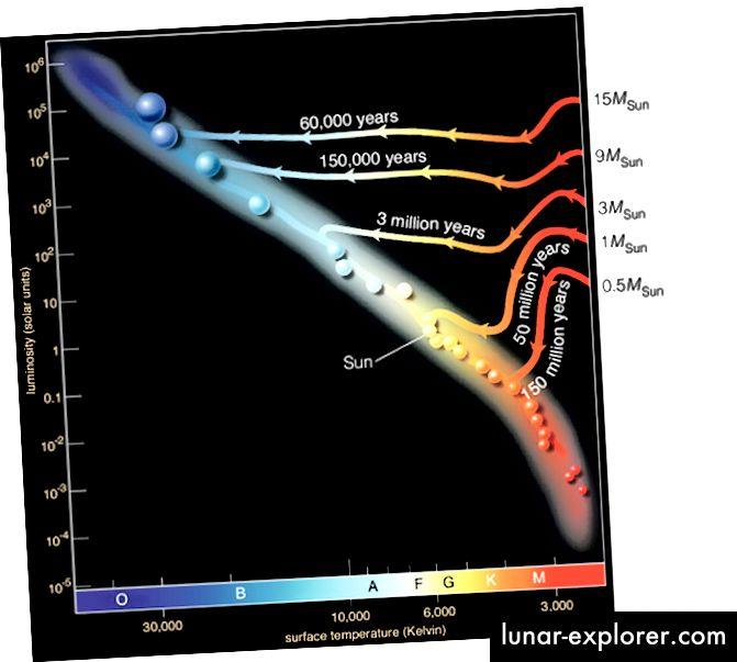 Die Zeit, die ein Protostar - ein Stern vor der Hauptsequenz - benötigt, um zu dem zu werden, was wir als Stern erkennen, der stark von seiner Masse abhängt. Bildnachweis: Prof. Dale Gary vom New Jersey Institute of Technology.