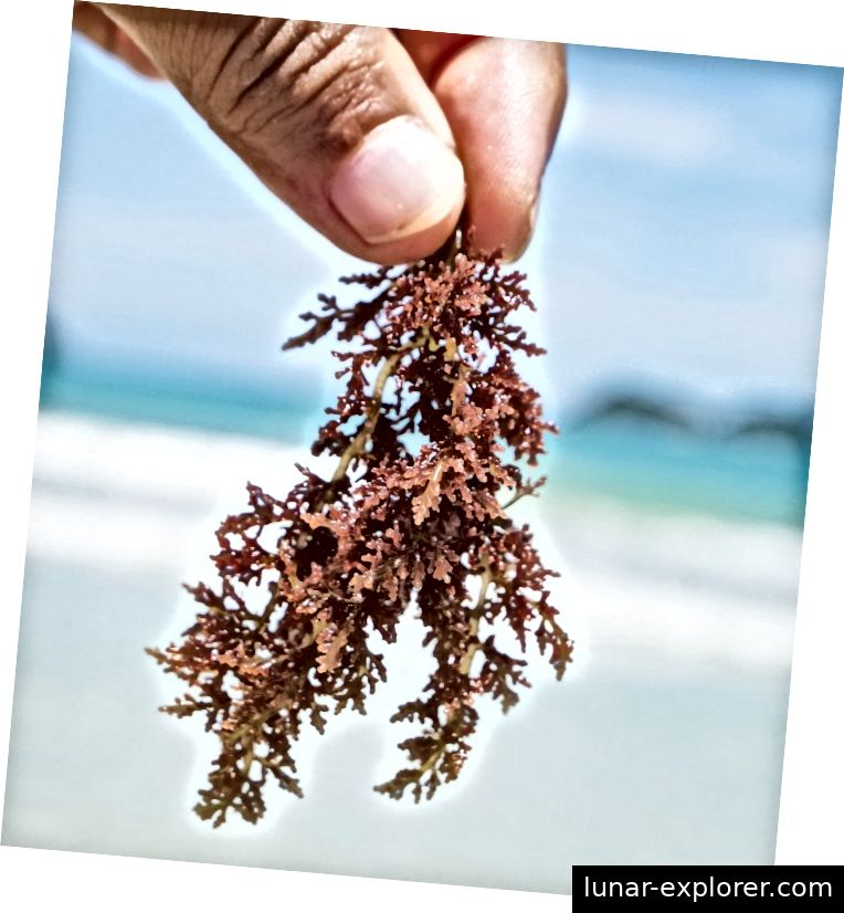 Carrageenan ist eine natürliche Substanz, die in Meeresalgen vorkommt, während Poligeenan in der Natur überhaupt nicht vorkommt.
