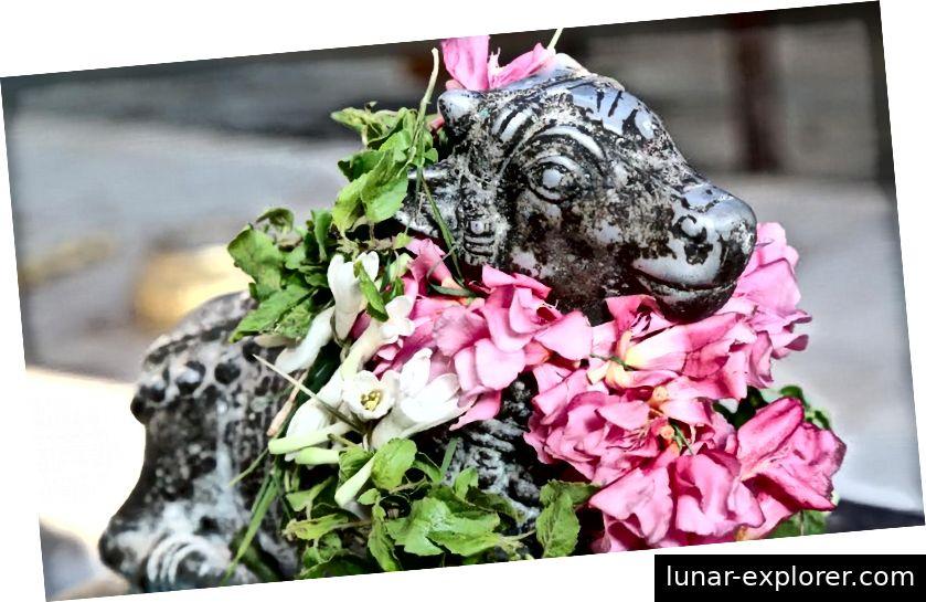 Nandi ukrašen cvijećem u hramu Lord Dhanavantari, Coimbatore