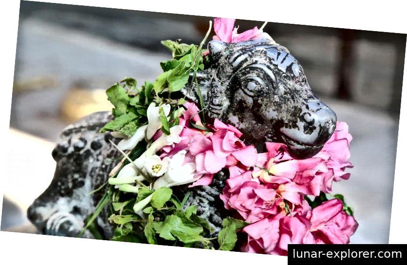 Nandi geschmückt mit Blumen bei Lord Dhanavantari Temple, Coimbatore