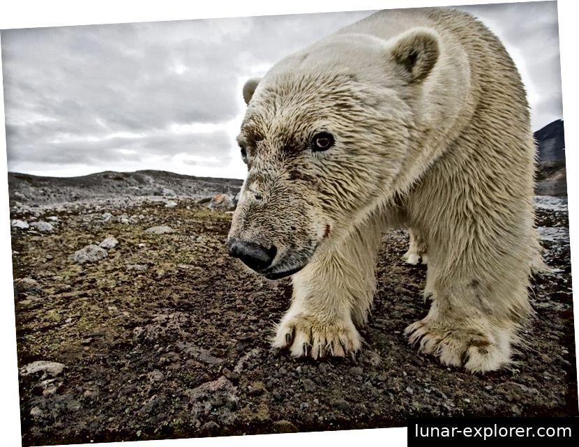 Izvor: National Geographic