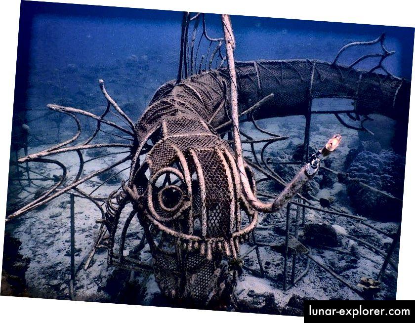 الحفظ البحري | © برنامج الحفاظ على الشعاب المرجانية الجديدة