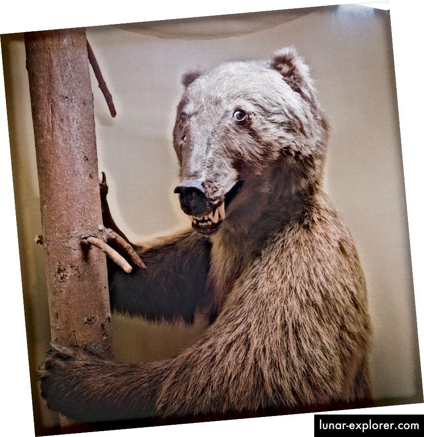 Die Bilder zu diesem Artikel stammen aus der Reihe Museology des Fotografen Richard Ross. Der größte Teil der Serie wurde in Naturkundemuseen auf der ganzen Welt gedreht und 1989 als Buch von The Aperture Foundation veröffentlicht. Auf dieser Seite ein taxidermierter Bär vom Universalmuseum Joanneum, Graz, Österreich, 1994.