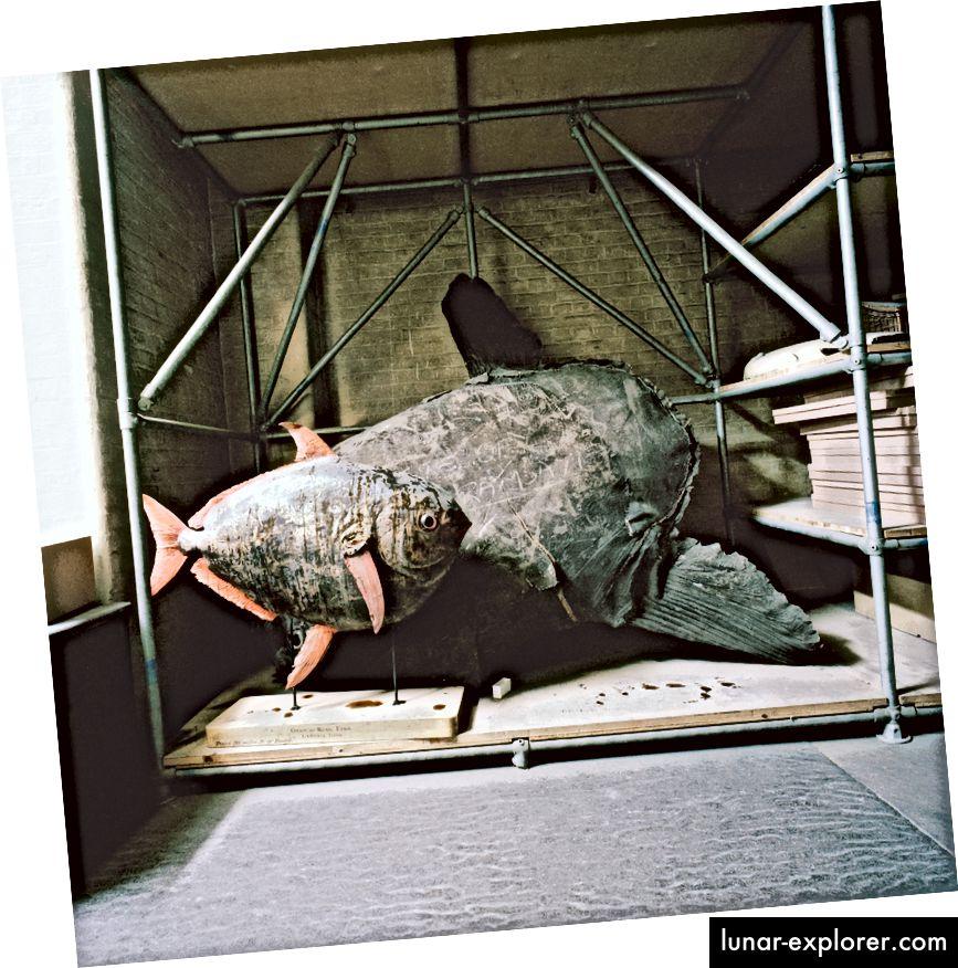 Naturhistorisches Museum, London, Großbritannien, 1985.