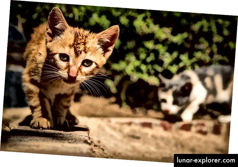 Radoznale mačke u Granadi, Španjolska