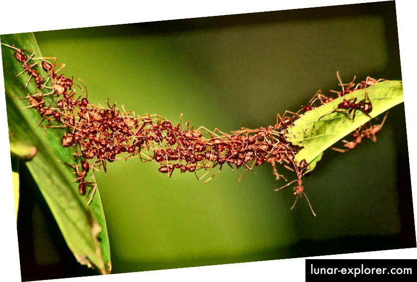 Kann die Ameise rechnen?
