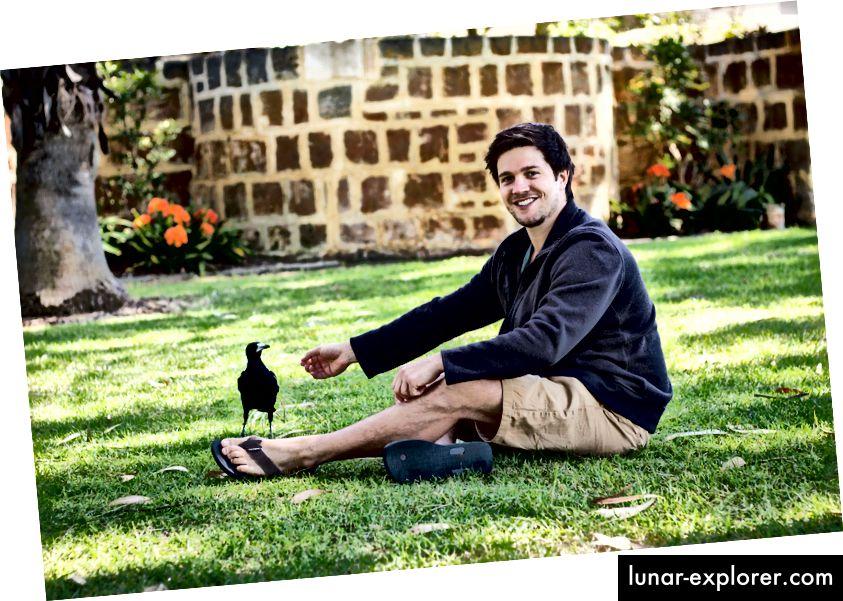 Dr. Benjamin Asthon i jedan od njegovih ispitanika, divlji zapadni australijski soje (Gymnorhina tibicen dorsalis). (Kredit: Sveučilište Zapadne Australije.)
