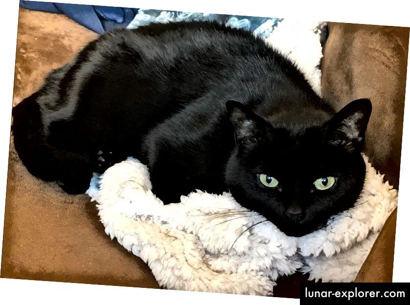 Meine Katze Pisco in ihrem natürlichen Lebensraum: Meine Decken stehlen.