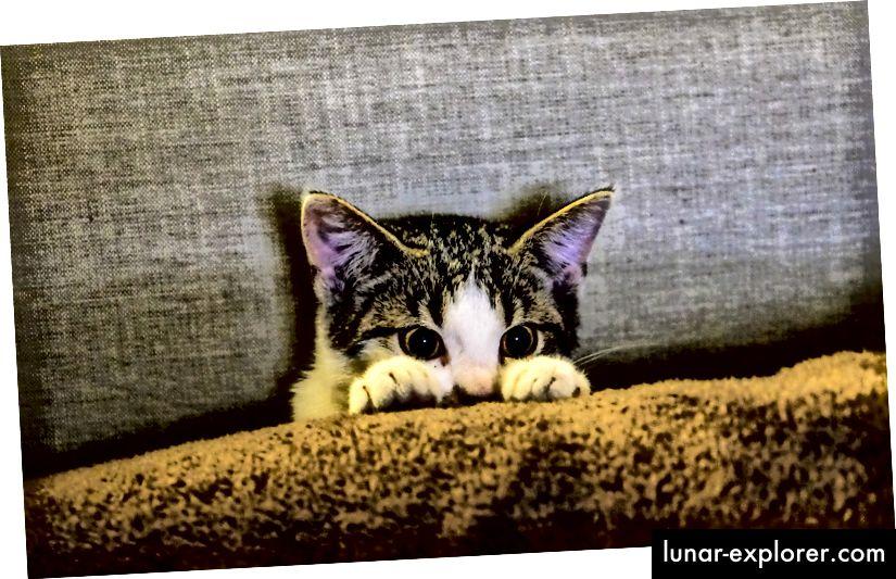 Abgebildet; Kätzchen schaut auf die dunklere Seite