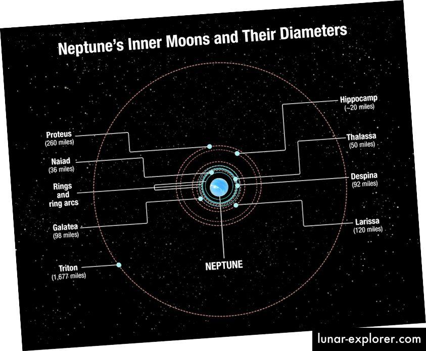 Mentre la maggior parte delle lune di Nettuno orbitano vicino al pianeta, inclusi Ippocampo e Proteo, il potente Tritone traccia un percorso più ampio in tutto il mondo. Credito immagine: NASA, ESA e A. Feild (STScI)