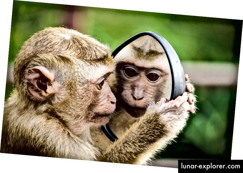 Quando si tratta di salute umana, dobbiamo concentrarci sulle nostre differenze evolutive piuttosto che sulle nostre somiglianze. (Credito fotografico: Andre Mouton su Pexels)