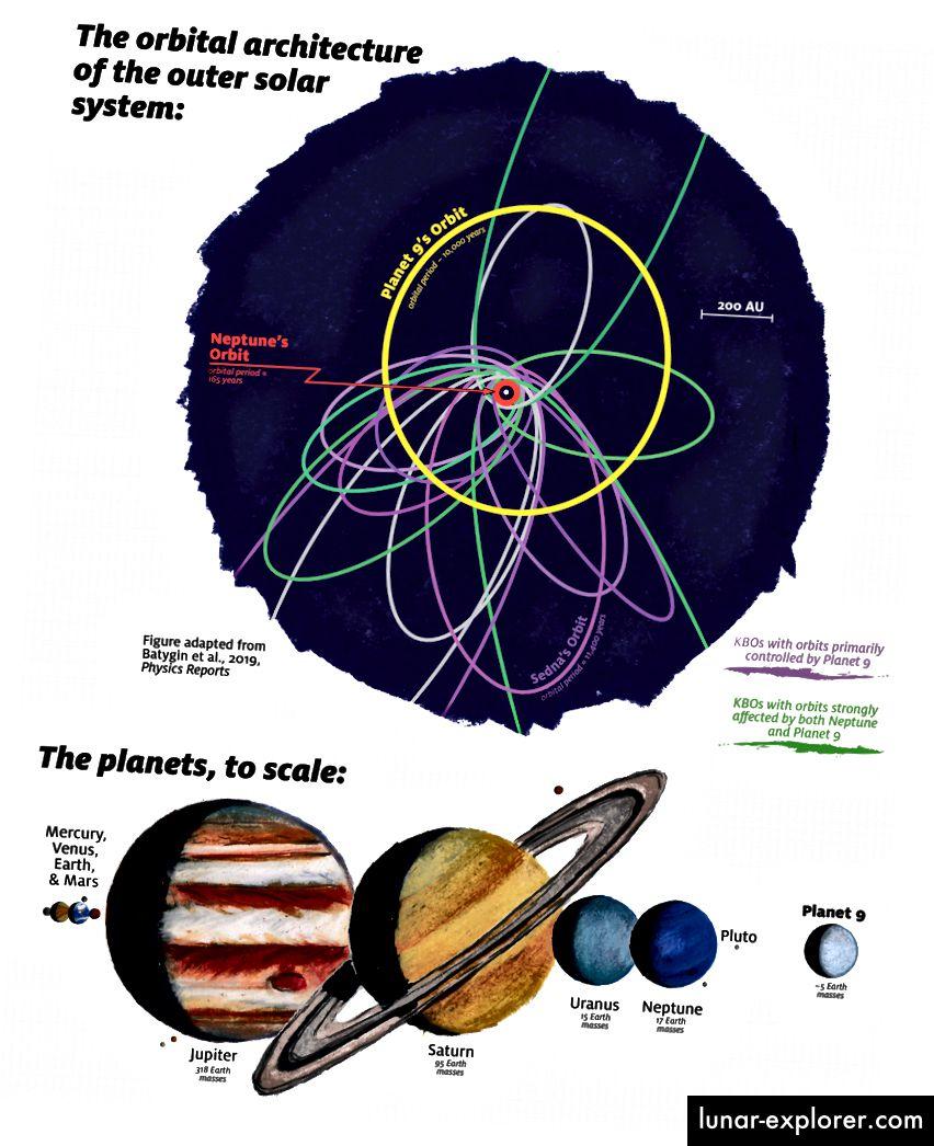 Un diagramme détaillant les orbites et les diamètres de la planète Neptune, ainsi que plusieurs objets trans-neptuniens. Les orbites en violet indiquent la présence d'une neuvième planète, loin du monde le plus éloigné. Crédit d'image: James Tuttle Keane / Caltech