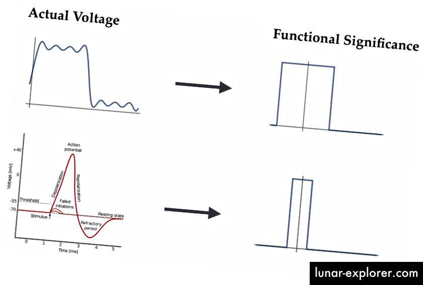 Il computer digitale e il neurone. In alto: la tensione effettiva del transistor viene