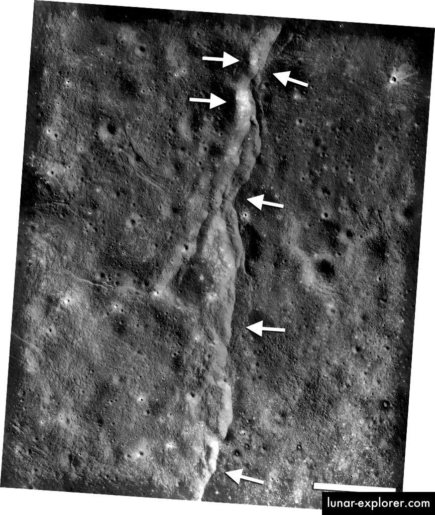 Questa prominente falla di spinta è una delle migliaia scoperte sulla luna dal Lunar Reconnaissance Orbiter (LRO) della NASA. Questi difetti assomigliano a piccole scogliere a forma di scala o scarpate se visti dalla superficie lunare. Le scarpate si formano quando una sezione della crosta lunare (frecce rivolte a sinistra) viene spinta su una sezione adiacente (frecce rivolte a destra) mentre l'interno della luna si raffredda e si restringe. Una nuova ricerca suggerisce che questi guasti potrebbero essere ancora attivi oggi (telaio LROC NAC M190844037LR; NASA / GSFC / Arizona State University / Smithsonian)
