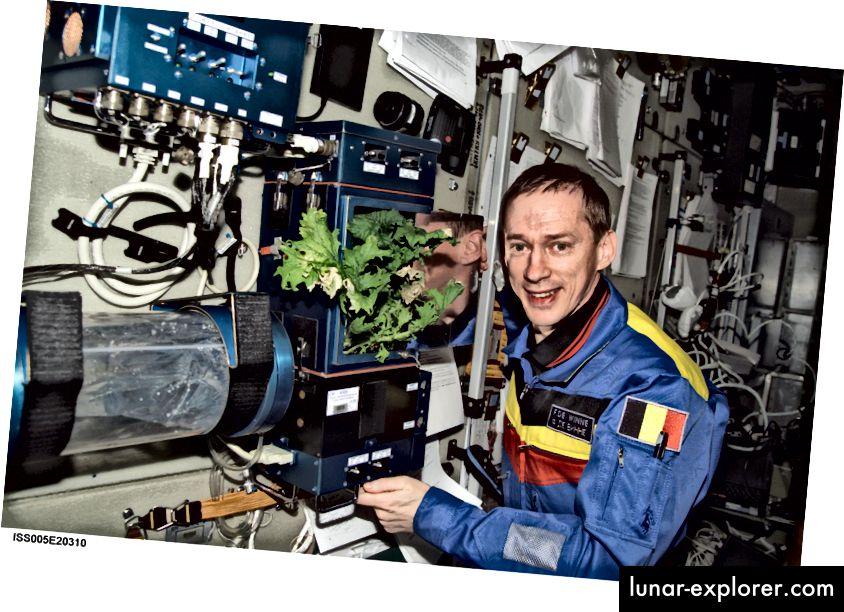 يقف رائد الفضاء البلجيكي فرانك دي وين بجوار تجربة زراعة الخس في محطة الفضاء الدولية. المصدر: ناسا