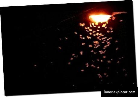 Осветлението и неговият ефект върху прилепите